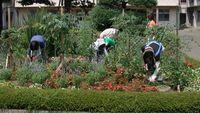 中庭花壇の除草