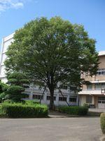 20110723bika_tree.jpg