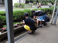 20130619ryokuka_03.jpg