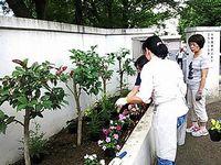 20130619ryokuka_07.jpg