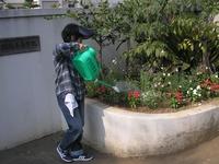 2013_watering_04.jpg