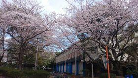 20140405_sakura_01.jpg