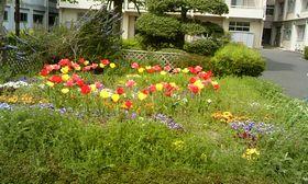 20140416_flower01.jpg