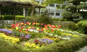 20140416_flower02.jpg