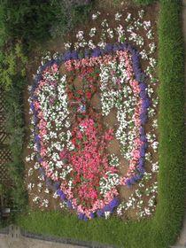 20140604_flower_jfa_2.jpg