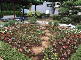 20150605_flower_03.jpg