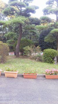 Tree_Oct_2011.jpg
