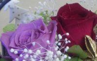 preserved_flower_sample2.jpg