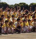 20150514_yellow_05.jpg
