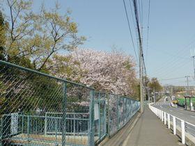 2014sakura01.jpg