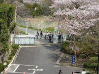 2014sakura22.jpg